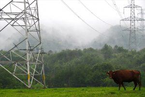 吉沢牧場(希望の牧場)の真ん中には、福島幹線と呼ばれる原発と東京を結ぶ高圧線が