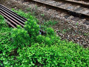 近所の「雑草」。「雑」と言われますが、目を凝らすと、いのちの輝きが見えるようです。
