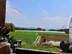 島原の乱の一揆軍の談合が行われた湯島。談合島の別名がありますが、団子島ではありません、、、田舎の墓にて、筆者撮影。