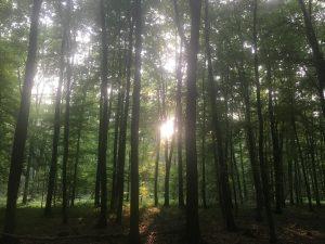 ドイツの森